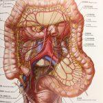新発見の臓器