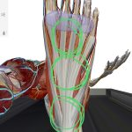 足の裏の痛み「足底筋膜炎」のセルフケア方法