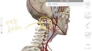 頭の奥の痛みは椎骨動脈が原因のことも