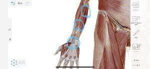 尺骨神経と正中神経