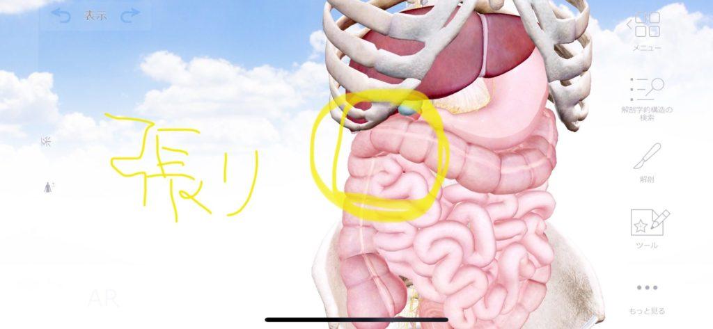 痛み 右上 腹部